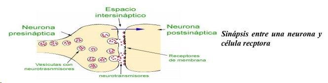Cuando el Cerebro Escribe, Alberto Repiiso